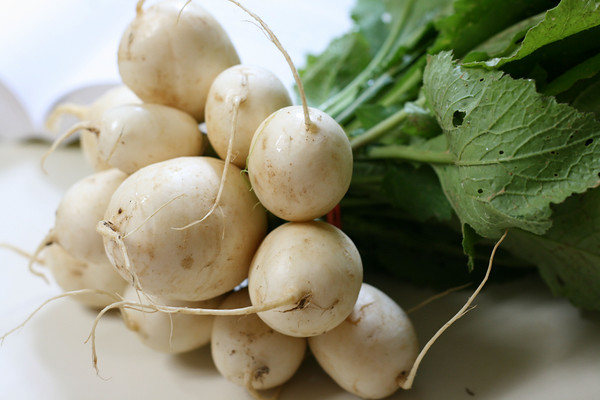 growing-turnips