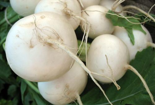turnip-diet